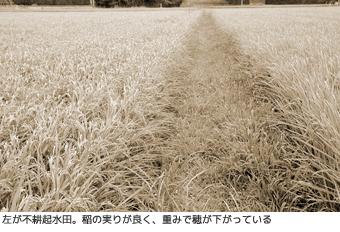 不耕起水田、比較