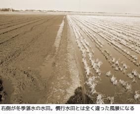 冬季湛水の水田