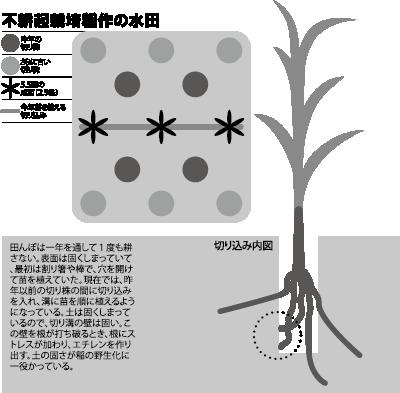 図、不耕起栽培稲作の水田